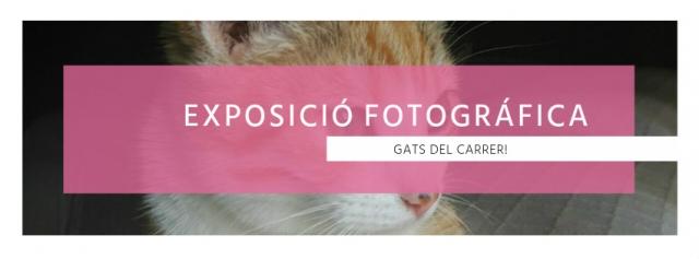 """Exposició fotogràfica """"Gats del carrer"""" al Bar Campus"""