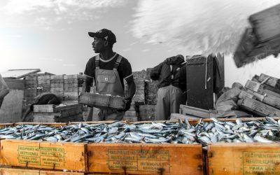 Exposició de fotografies de Christophe Sion al Bar Campus sobre una nit de pesca de la sardina a Cambrils